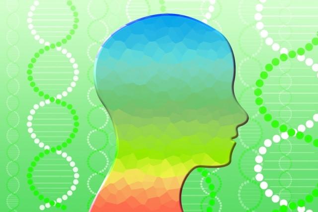 痩せる脳はセロトニンが鍵?作り方や太る脳との違い!